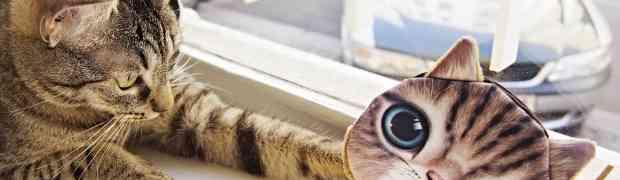 Le café des chats et le café des pumas