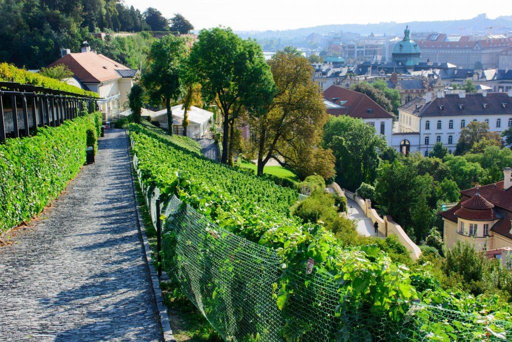 prague chateau vignes